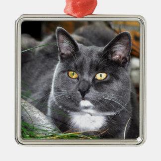Portrait grey cat christmas tree ornament