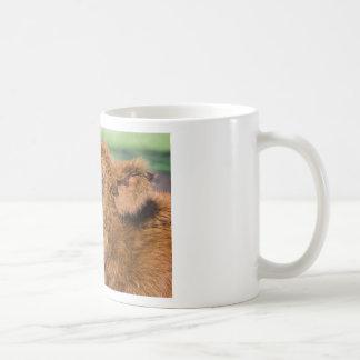 Portrait head newborn scottish highlander calf coffee mug