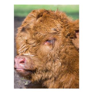 Portrait head newborn scottish highlander calf letterhead