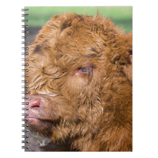 Portrait head newborn scottish highlander calf spiral notebook