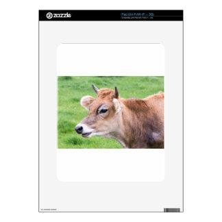 Portrait head of horned brown cow iPad decals