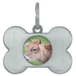 Portrait head of horned brown cow pet ID tag