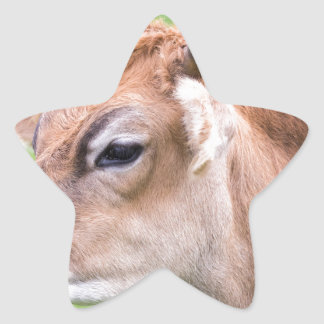 Portrait head of horned brown cow star sticker