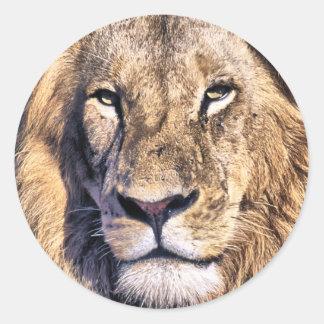 Portrait lion classic round sticker