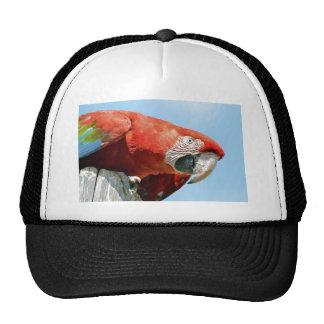 Portrait macaw chloroptera trucker hat