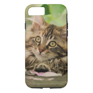 Portrait Maine Coon Cat Kitten, protective iPhone 8/7 Case