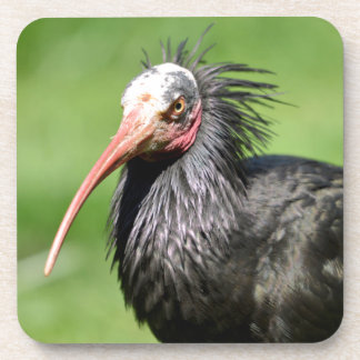 Portrait Northern Bald Ibis Drink Coaster