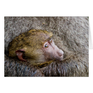 Portrait Of A Baby Olive Baboon (Papio Anubis) Card