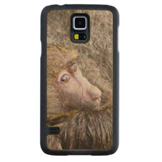 Portrait Of A Baby Olive Baboon (Papio Anubis) Carved® Maple Galaxy S5 Slim Case