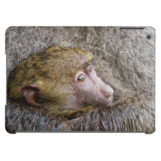 Portrait Of A Baby Olive Baboon (Papio Anubis) iPad Air Case