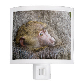 Portrait Of A Baby Olive Baboon (Papio Anubis) Night Light