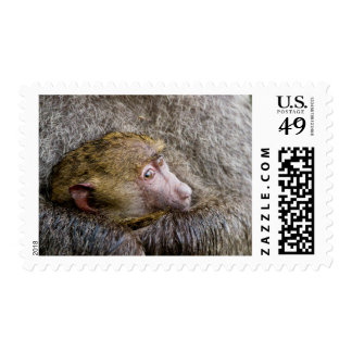 Portrait Of A Baby Olive Baboon (Papio Anubis) Postage