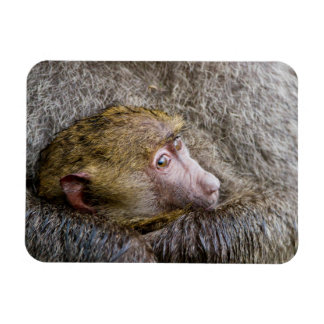 Portrait Of A Baby Olive Baboon (Papio Anubis) Rectangle Magnet