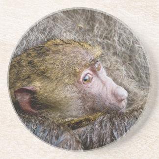 Portrait Of A Baby Olive Baboon (Papio Anubis) Sandstone Coaster