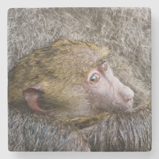 Portrait Of A Baby Olive Baboon (Papio Anubis) Stone Coaster
