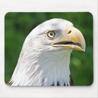 Portrait of a Bald Eagle Mouse Pad