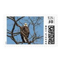 Portrait of a Bald Eagle Postage