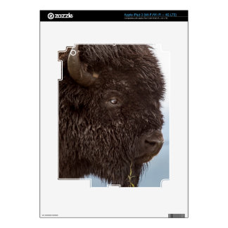 Portrait Of A Bison Bull In The Rain 2 iPad 3 Skins