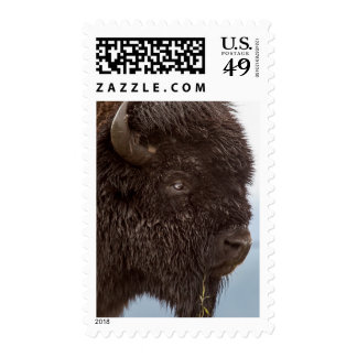 Portrait Of A Bison Bull In The Rain 2 Stamp