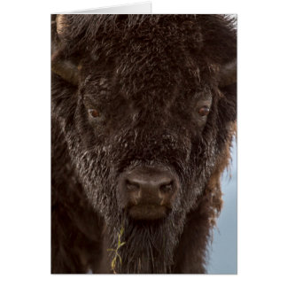 Portrait Of A Bison Bull In The Rain Card