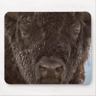 Portrait Of A Bison Bull In The Rain Mouse Pad