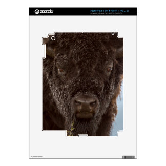 Portrait Of A Bison Bull In The Rain Skins For iPad 3