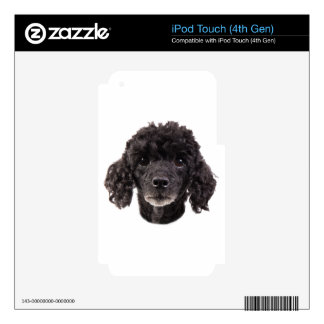Portrait of a black poodle iPod touch 4G skin