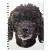 Portrait of a black poodle notebook