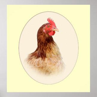 Portrait of a Brown Hen Print
