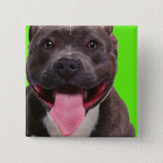 portrait of a bulldog pinback button