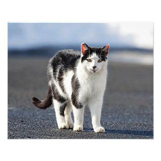 Portrait of a cat photo print