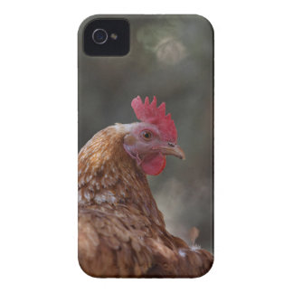 Portrait of a chicken on a farm. Case-Mate iPhone 4 case