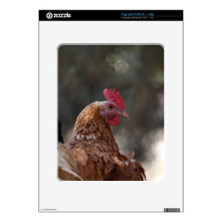 Portrait of a chicken on a farm. decal for iPad