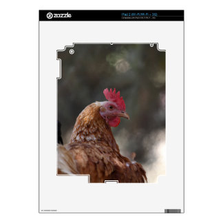 Portrait of a chicken on a farm. decal for iPad 2