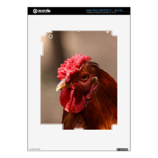 Portrait of a chicken on a farm. skins for iPad 3