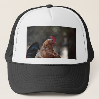 Portrait of a chicken on a farm. trucker hat