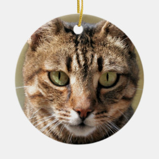 Portrait Of A Cute Tabby Cat With Direct Eye Conta Ceramic Ornament