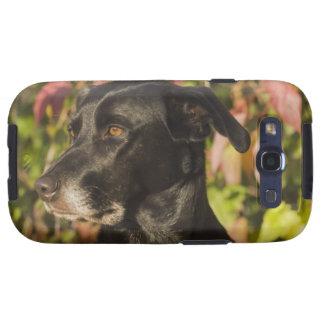 Portrait Of A Dog Galaxy SIII Cases