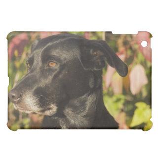 Portrait Of A Dog iPad Mini Case