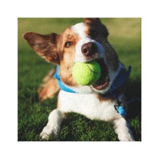 Portrait of a dog, Phoenix, Arizona Canvas Print
