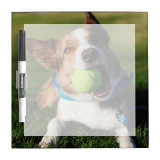 Portrait of a dog, Phoenix, Arizona Dry-Erase Board