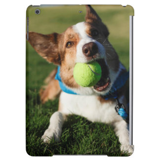 Portrait of a dog, Phoenix, Arizona iPad Air Cases