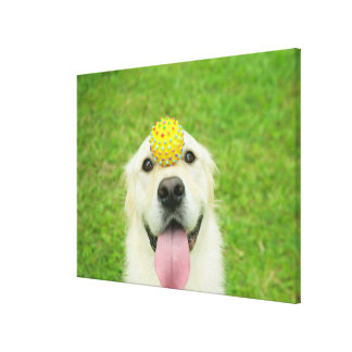 Portrait of a dog with a ball on its nose canvas print