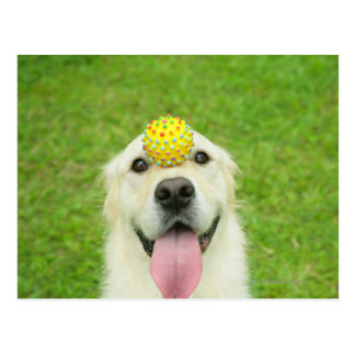 Portrait of a dog with a ball on its nose postcard