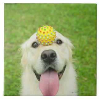 Portrait of a dog with a ball on its nose tiles