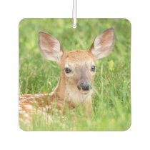 Portrait of a Fawn (white-tailed deer) Air Freshener