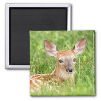 Portrait of a Fawn (white-tailed deer) Magnet