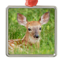 Portrait of a Fawn (white-tailed deer) Metal Ornament