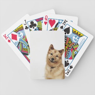 Portrait of a Finnish Spitz dog smiling Bicycle Playing Cards