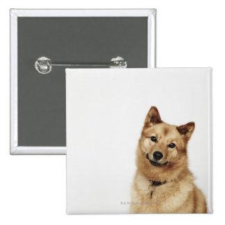 Portrait of a Finnish Spitz dog smiling Pinback Button